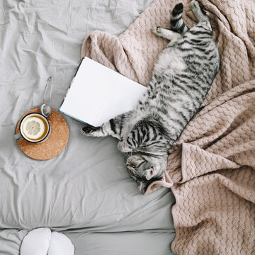 Cute cat sleeping at home. Book and cup of lemon tea with home decor on the warm soft bed. Scandinavian style, hygge, weekend cozy concept.