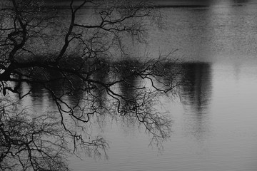 The silhouette of bare branches of a tree in front of a forest lake. Sentimental monochrome landscape, black-and-white photography. Concept for mourning, death and depression.
