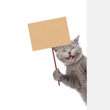 Cat behind white banner holding blank banner mock up on wood stick. isolated on white background