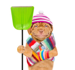Funny puppy  wearing a warm hat and scarf with pompon,  holds a shovel and shoving thumbs up. isolated on white background
