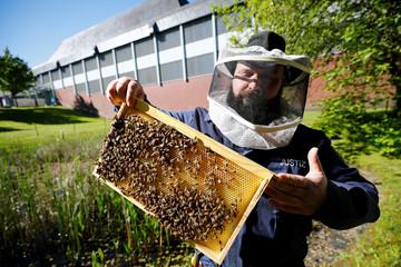 Beekeeping project in the North Rhine-Westphalian prison JVA Remscheid in Remscheid