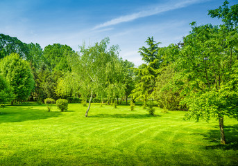 a backyard and garden with manu trees and grass on lawn
