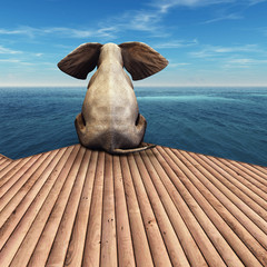 Elephant admiring the ocean