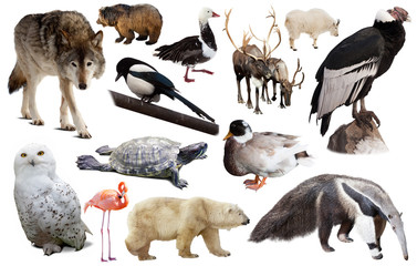 north american animals isolated Wall mural