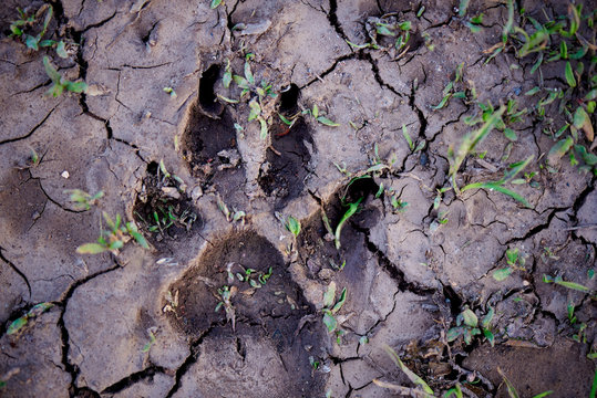 Footprint on cracked soil with grass close-up.