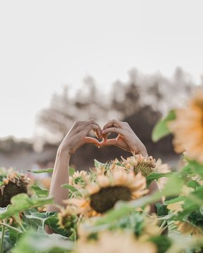 person showing heart hand gestures surrounded by sunflowers