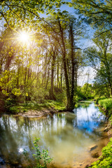 Beautiful forest with brook and bright sun shining through the trees