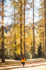 woman walking near pine trees during daytime