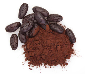 Cocoa bean with powder on white background