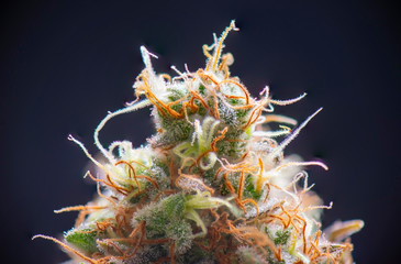 Spoed Fotobehang Macrofotografie Macro detail of Cannabis flower (sour diesel strain) isolated over blac
