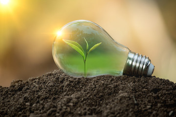 The tree growing on the soil in a light bulb. Creative ideas of nature protection or save energy and environment concept