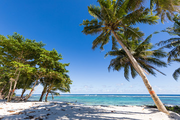 Vibrant tropical beach on Samoa Island with coconut palm trees and black rocks
