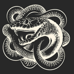 Coiled Snake Hand Drawn Illustration