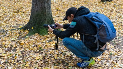 Photographer is taking a picture of squirrels in autumn forest of Siberia, Tomsk
