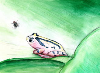 Frosch und Fliege-Aquarell