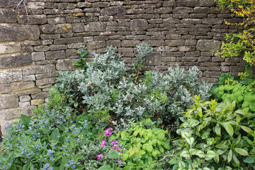 Plants and flowers in a garden border against a backdrop of a dry stone wall.