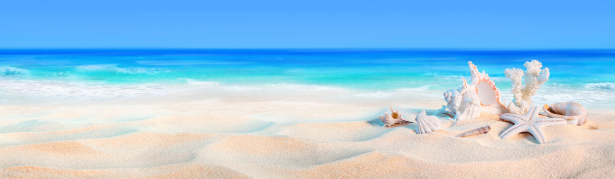seashells on seashore - beach holiday background..