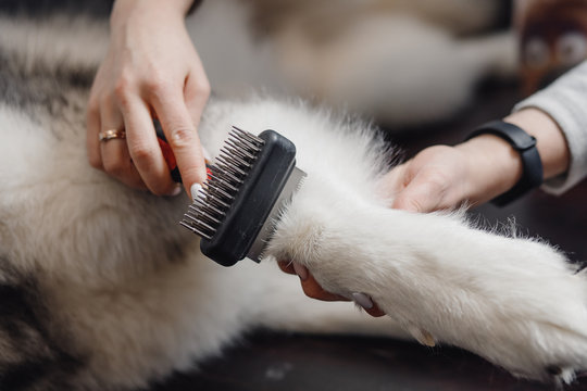 White dog paw with long claws combed at special brush