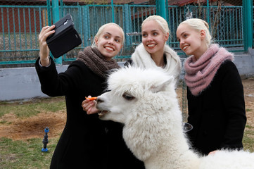 Triplet sisters pose for a selfie as they feed an alpaca at a zoo in Krasnoyarsk