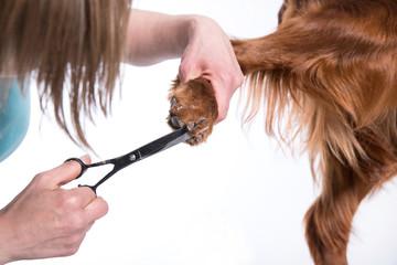 Grooming Dog. Pet Groomer Brushing Dog's
