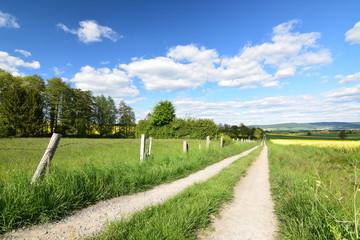 Frühlingslandschaft mit Feldweg und blühendem Raüsfeld