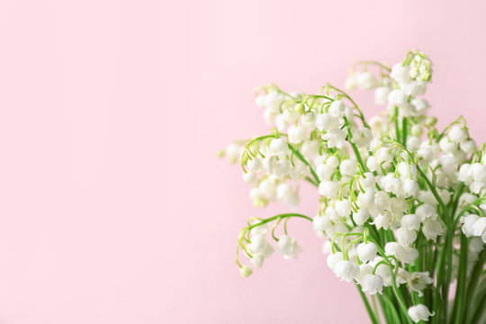Beautiful lily of the valley flowers on color background, space for text