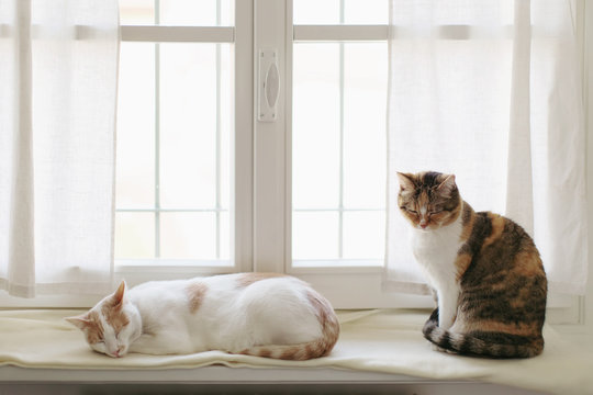 Two cats relax together on windowsill at home