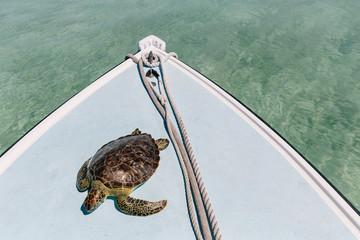 Volunteer Sea Turtle Tagging Expedition
