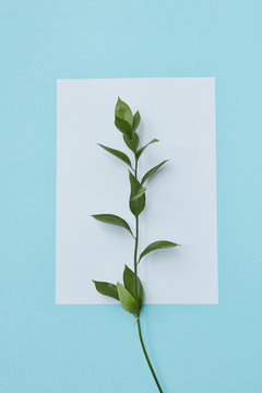 White postcard decorated with branch leaves