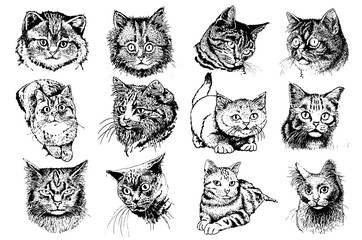 Graphical set of cats isolated on white background, pets,vector illustration