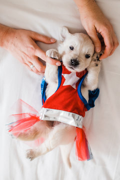 Wonder woman the puppy edition