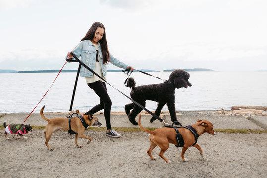 Teenage girl walking dogs