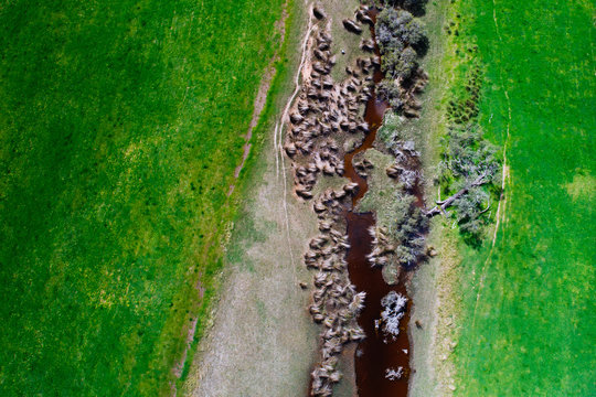 A small creek flows a steady stream of fresh water through a vibrant green grassy field on a rural property