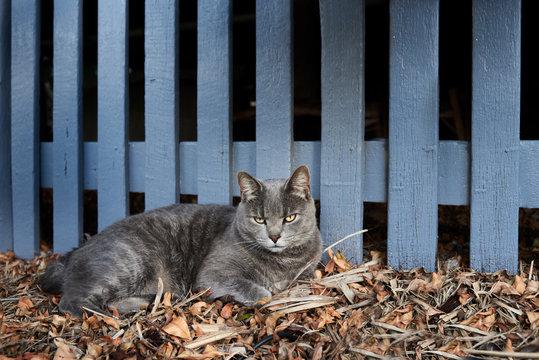 Portrait of cat in the garden.
