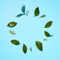 Flat Lay view of green leaves on a blue background.