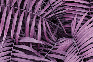 Infrared: Abstract palm plant leaves