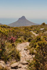 Trail to the Lion's Head Mountain in the Table Mountain National Park, Cape Town, South Africa.