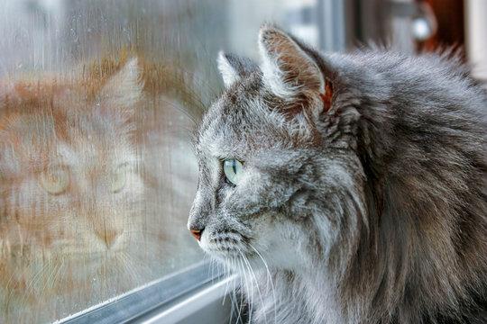 cat near the wet window
