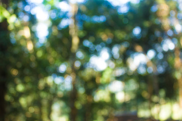 Abstract bokeh blur green tree in forest background. Wall mural