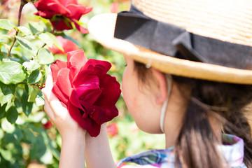 赤い薔薇の香りを嗅ぐ女の子