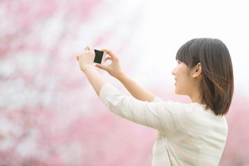 スマートフォンで桜の写真を撮る女性