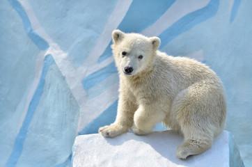 Poster Ijsbeer polar bear