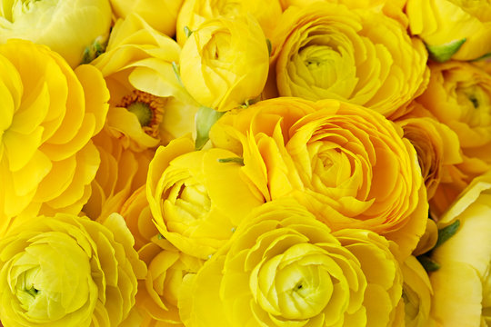 Macro shot of beautiful bouquet of yellow ranunculus flowers with visible petal texture structure. Close up composition with bright patterns of flower buds with a lot of copy space for text. Top view.