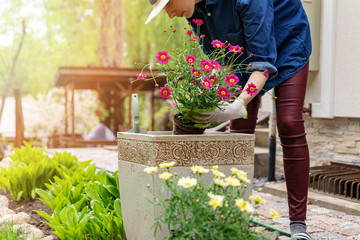 woman planting flowers in pot at home garden