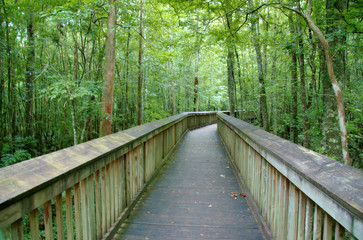 An elevated path over a swamp at Tickfaw State Park, located 7 mi (11 km) west of Springfield, in Livingston Parish, Louisiana, USA.