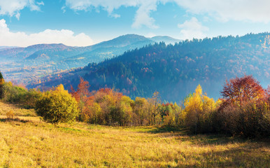sunny autumn morning in countryside. fog in the distant valley. trees in fall foliage on the hillside. mountain range in the distance. bright weather with clouds on the sky