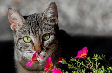 Close up de gato mostrando a lingua