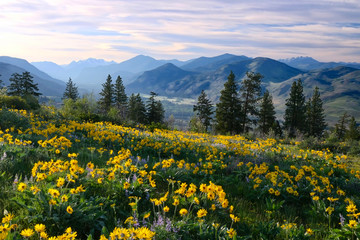 Wall Murals Spring Hiking in Washington. Meadows with arnica and lupine wildflowers and Cascade Range Mountains near Winthrop. WA. Unites States.