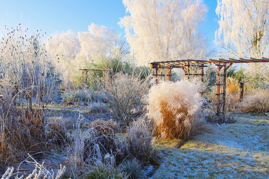 Garten im Winter - garden in winter with hoarfrost on a cold day