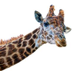 fractal Giraffe head face